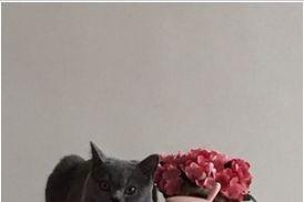 雷米高猫粮怎么样?好不好?-3