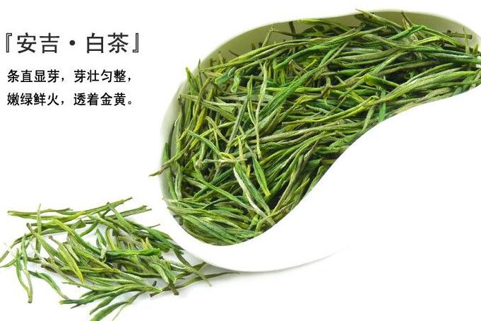 安吉白茶采摘日期?安吉白茶是绿茶吗?-1